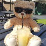 Honey Bear enjoying a refreshing juice