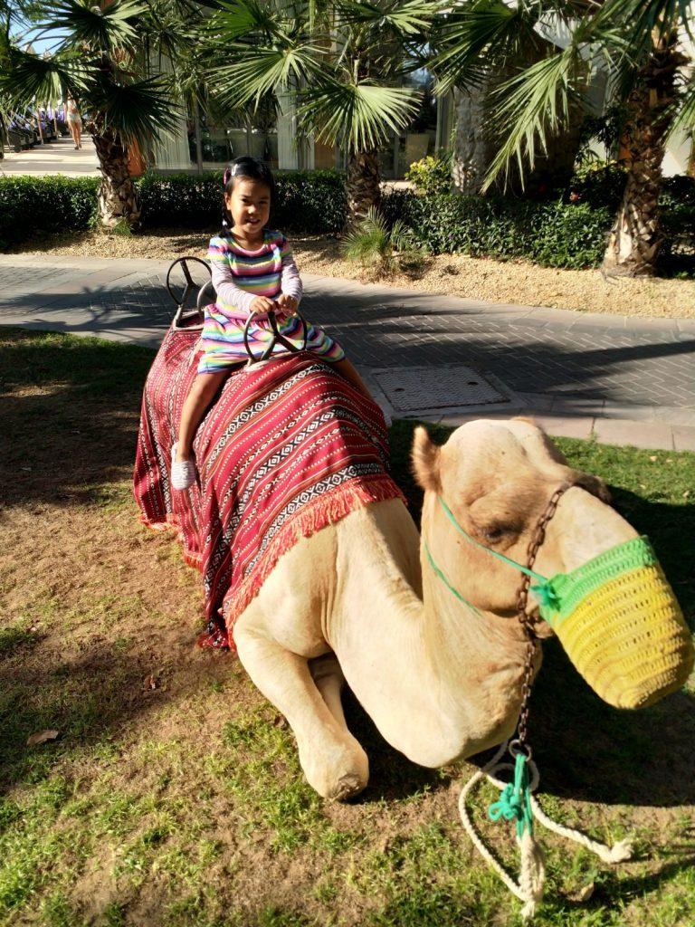 ABC Dad Cara Christmas in Dubai Camel