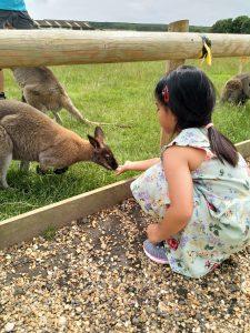 Summer Holidays Tapnell Farm Wallaby