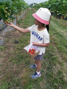 Millets Farm strawberries
